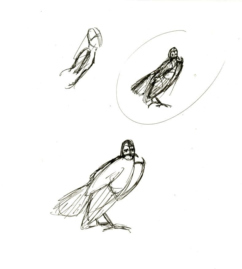 Barn owl 02