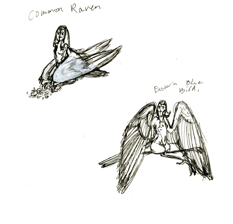 Common raven and Eastern Bluebird