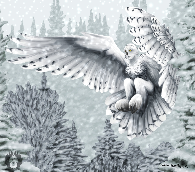 Snowy Owl Harpy02 By Ciara Southwick